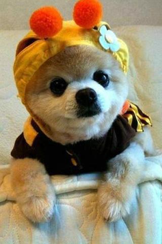 可爱小狗卖萌